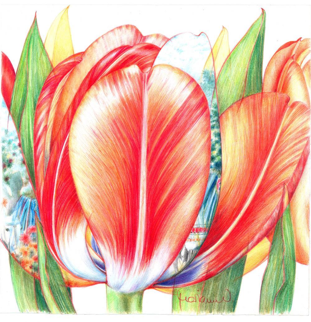 Tulpenlandschaft